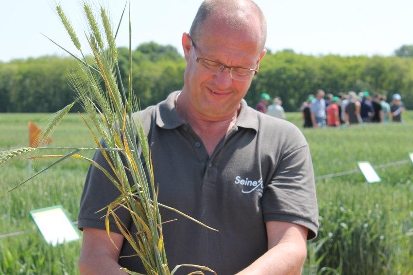 Expérimentation : les produits phytosanitaires s'invitent dans le traitement des cultures céréalières…