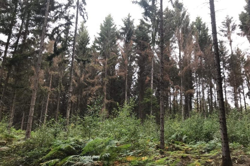 Coup de pouce de 200 millions pour rendre plus vertes les forêts : priorité est faite à l'économie et à la biodiversité