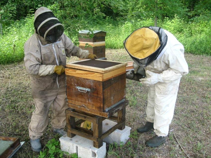 Le Moulin à Tan commercialise sa production de miels : un filon qui ne devrait pas se tarir…