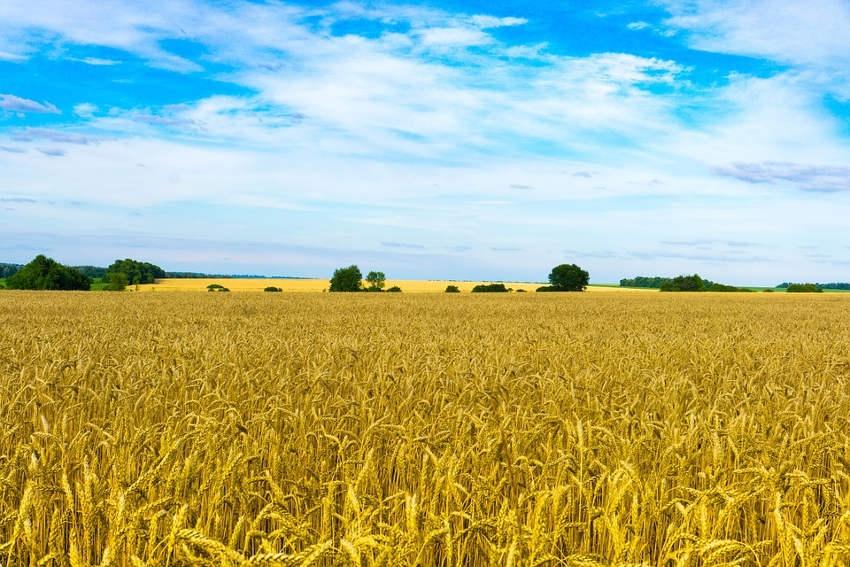 Retour d'expérience depuis l'Ukraine avec le Crédit agricole : à la découverte de nouvelles potentialités