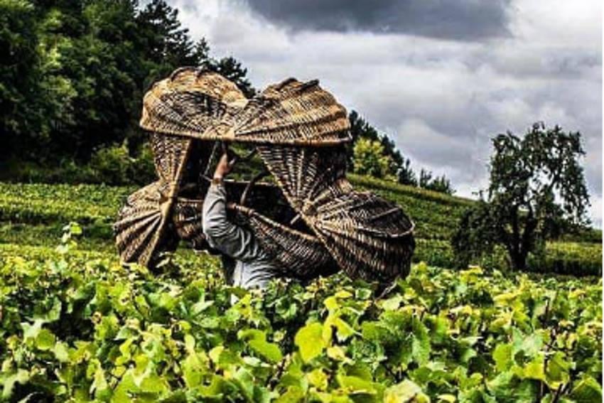 Le Crédit agricole Champagne Bourgogne sollicite le talent des photographes amateurs sur Instagram…