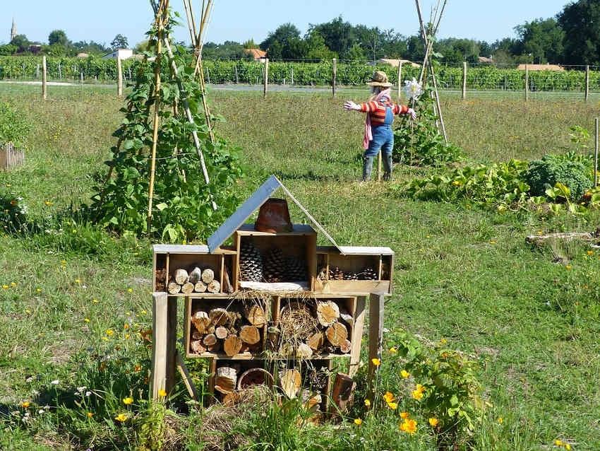 La nature reprend ses droits en ville grâce à la judicieuse initiative de la JCE Auxerre…