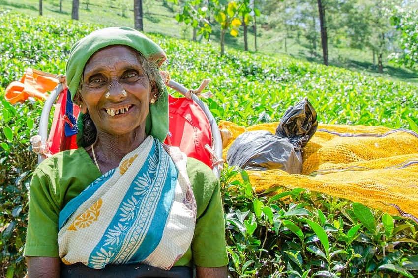 Sri Lanka : l'horreur au nom de l'intégrisme s'abat au pays des éléphants…