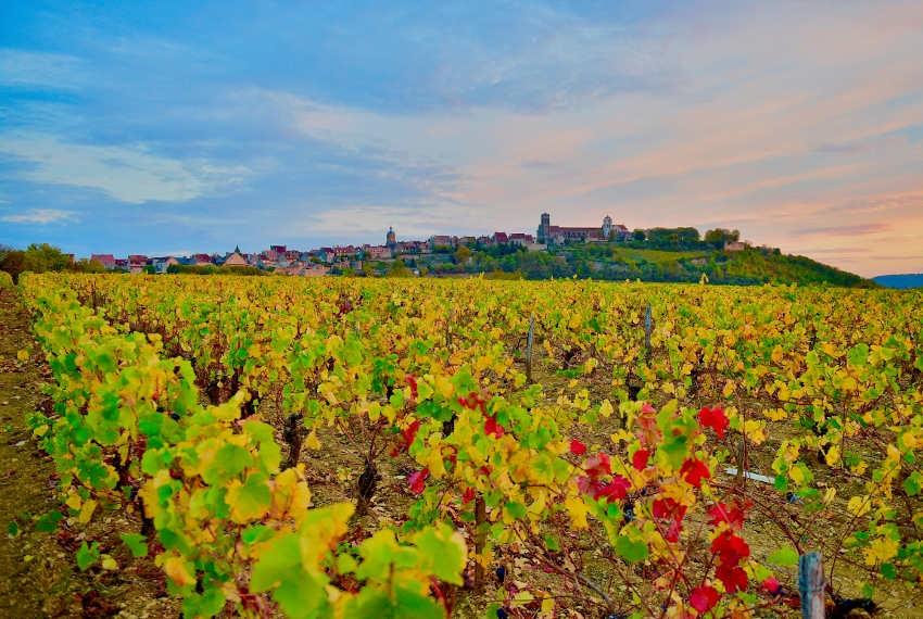 DEPTOUR : la Saint-Vincent de Bourgogne à Vézelay et la Family Week dans le viseur de la presse spécialisée…