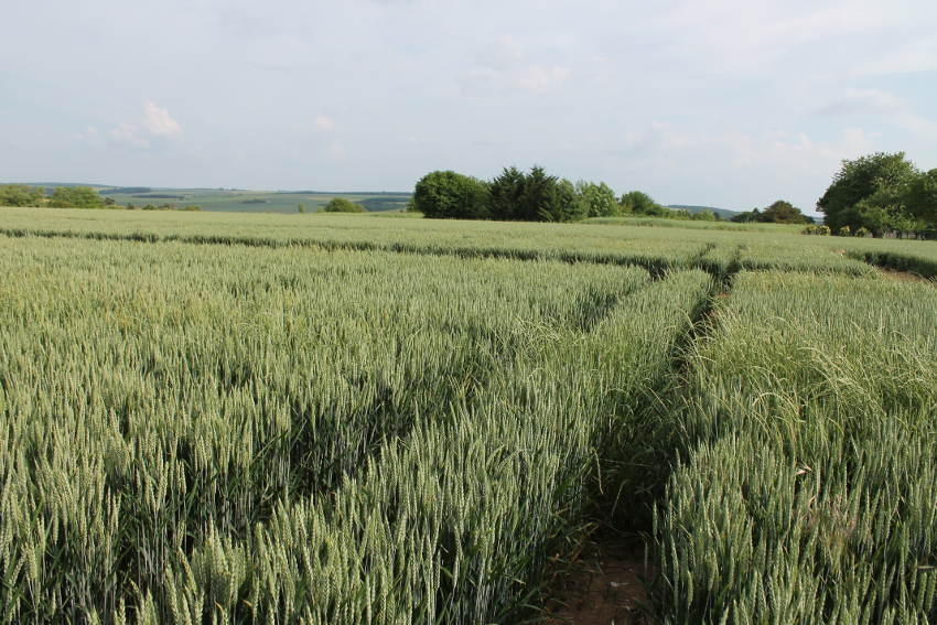 596 exploitants agricoles de l'Yonne ont sollicité leur chambre consulaire pour les déclarations de la PAC 2018…