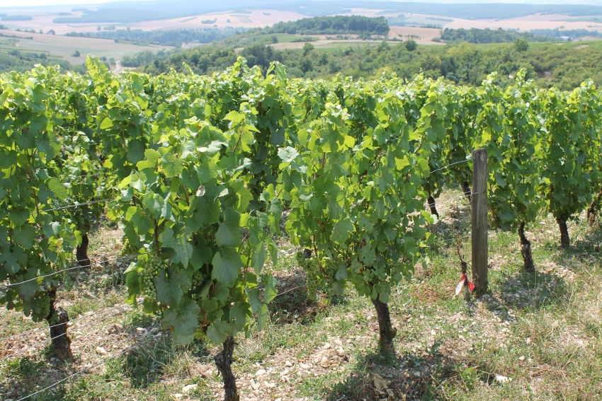 Charte ZNT : les distances d'épandage des produits phytosanitaires sont désormais réduites…